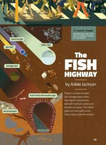 The fish highway cover.