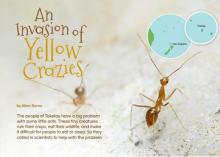 An Invasion of Yellow Crazies cover.