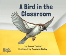 Bird in the classroom.