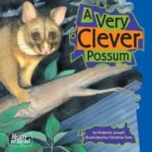 A very clever possum.