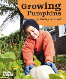 Growing pumpkins.
